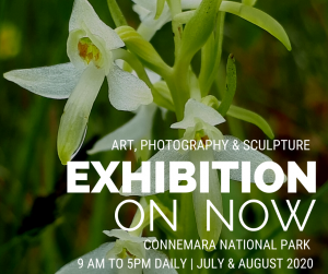 Art, Photography & Sculpture - July and August 2020